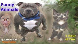 Funny Animals Cats & Dogs, Amazing Pets Agility & Talent Compilation, Best #1 hour Cute Pet Moments