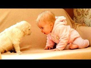 Funny Videos ★ Best Funny Babies & Dogs 2017 ★ New Funny Videos 2017