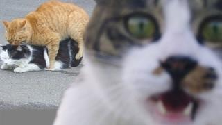 Funny Cat Videos Cat Vines Compilation - Animals Fails