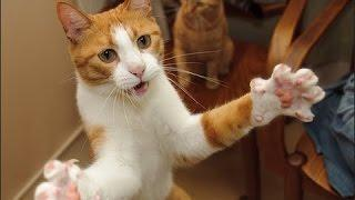 Cats being crazy - Funny Cats Compilation - Cat Vines