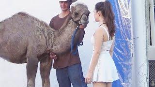 CAMEL TOE PRANK