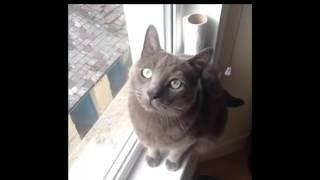 Funny CATS | Best Funny Cat Videos Ever  | Funny Kitty Cat Vines Compilation №62