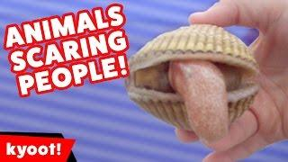 Funniest Animals Scaring People Reactions of 2016 Weekly Compilation | Kyoot Animals