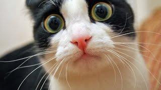 funny cat vines clean funny cat jump fails compilation funny cat vines clean funny cat moments