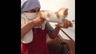 New funny cats Vines Compilation part 1