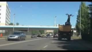 [CAR CRASH] IDIOT FUNNY DRIVERS | CRAZY DRIVING FAILS