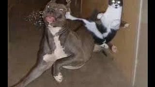 Funny Cats And Dog Compilation   Best Dogs And Cats Fails Show