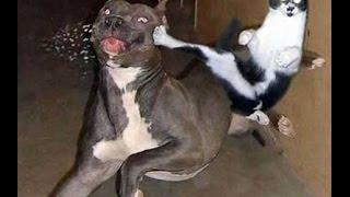 Top 10 Funny Animals Funny Dogs And Cats Funnniest Video Animals 2015