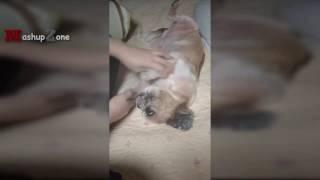 Funny Dogs Who Don't Want To Take A Bath - Try Not To Laugh [BEST OF]