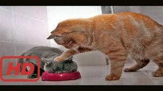 afv funny vines fails  Funny Naughty Cats Compilation 2017 | Best Funny Cat Fails Vines