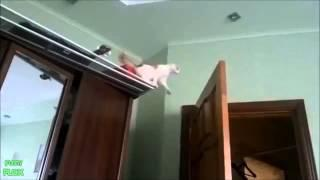 Funny Cats Video |Best Cats Vines|Funny Pets Video| [2015]