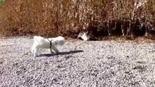 the best fails cats vs dogs - Compilation 2014 HD