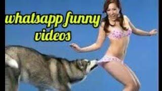 funny videos competition whatsapp masti