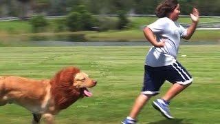 LION PRANK!!!