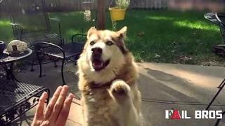 Funny Vines Fails Compilation |  Cats and Dogs giving High 5s Compilation | Funny Cats and Dogs Fai