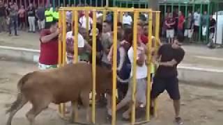 Funny videos People fail bull fighting Funny Animals videos Bull Fails Videos|hamza ashraf