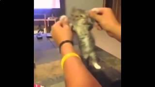 Best Cat Vines part 1