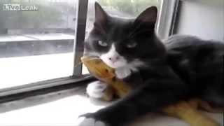 Funny Cats - New Funny Cats Video - Funny Animals - Funny Vines - Funny Videos