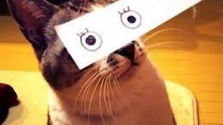 Funny CATS Fails Compilation 2017 Best ANIMALS Videos - Funny Epic Vines Vine Compilation 2017
