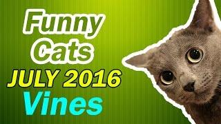 Funny Ultimate Fails | Funny Cats Videos Compilation | Cats Vines - July 2016