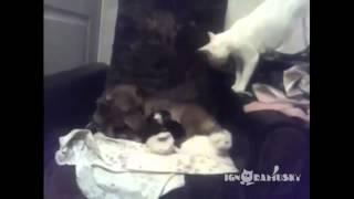 Funny Cat Vines Compilation November 2014 - Part 6