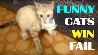 Best of Funny Cats Compilation 2017 | Funny Fails Vines Videos | Try Not To Laugh | WIN / FAIL