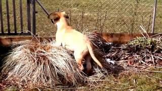 Watch Best Funny Dogs Compilation 2016 - Best Dog And Puppy Fails! - Funny Dogs Puppies