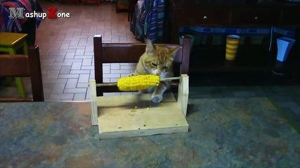 funny videos of funny cats compilation 2016 best of.