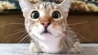 Funny Vines Fails Compilation |  Funny And Cute Cat Fails Compilation 2016 | FailBros | Cats vs Dog