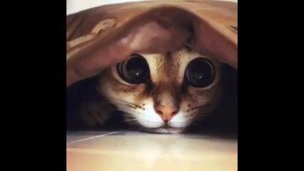 cat funny(3)