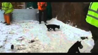 Dogs Catching Rampaging Rats - Funny animals - Funny dog video