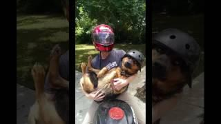Dogs and cats funny - funny cats and dogs part 5 - funny cats vs dogs - funny animals compilation