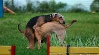 funny dogs - dogs, man's best and funniest friends - funny dog compilation