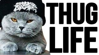 Best Thug Life - Cat Thug Life Videos Compilation — Daily Fails And Vines