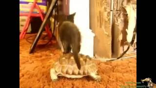 Funny Videos - Funny Vines - Best videos Funny Cats and Dogs - Fail Compilation - Funny Animals