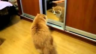 Самые смешные коты)))Cat Vines | Best Cat Vines | Funny Cat Vines