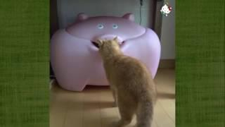 Funny Cats Compilation 2016   Best Funny Cat Videos Ever    Funny Vines #1 ~ Funny View