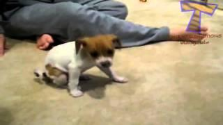 Funny dumb dogs Cute and funny dog fail compilation