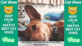 Funniest Cat Vines #121 - Updated September 17th, 2015