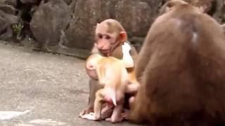 Funny Animal 2016 |  Funny monkeys, Funny vines 2016 , funny cats and dogs, Funny Fails Girl