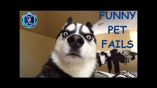 HLMusic TOP Funny Animal Fails Compilation - Best Cat, Dog Fail Vines 2016