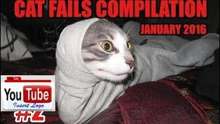 ULTIMATE Funny Cats Vines - A Funny Cat Videos Compilation 2016 August #2