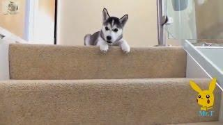 Funny Dogs - A Funny Dog Videos Compilation 2017