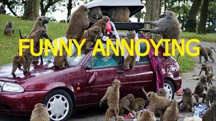 Funny annoying monkeys - Cute and funny monkey compilation