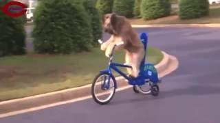 Crazy Dogs- Animal Videos - (Nice Comedy Fun Video Clips)-Part-5