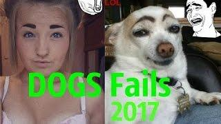 Best DOGS Fails Compilation Fabruary 2017, Crazy and Stupid, Funny Animals