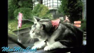 Funny Videos | Funny Vines | Funny Cats | Cool Cute Cats Funny Videos #10