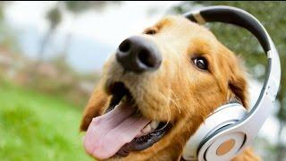 Funny Dogs -  A Funny Dog Videos Compilation 2017  - part 01