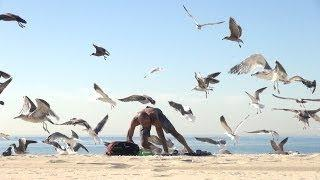 Crazy Bird Prank!!