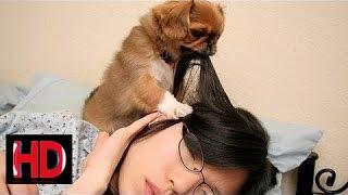 Cute dogs waking up owners - Funny dog compilation